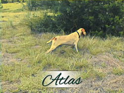 atlas 4