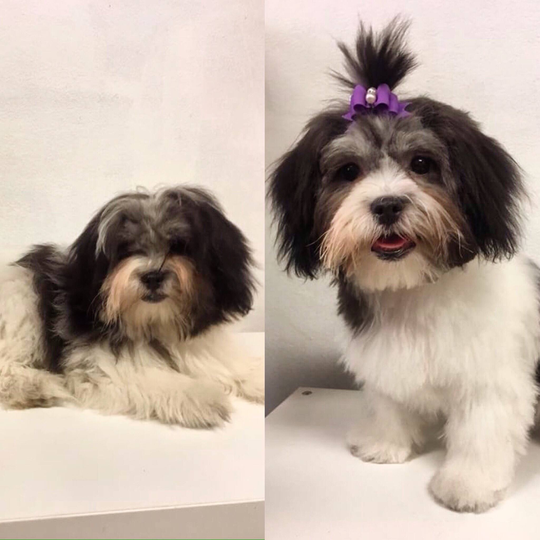 Roxy - Before and after
