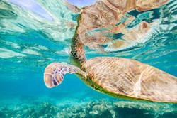 fuey photography-exmouth-ningaloo-underwater-turtle-2