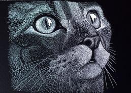 Scarperboard Cat