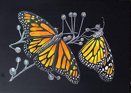 Monarch butterfly scraperboard