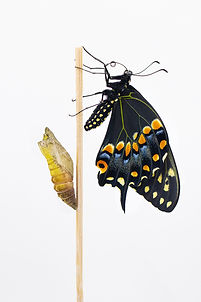 Model for Swallowtail Scales