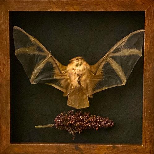 KERIVOULA PICTA ASIAN BAT framed with foliage