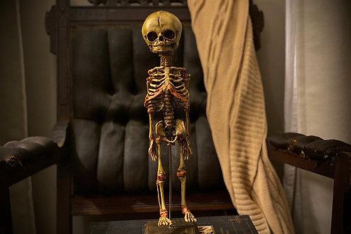 Replica antique Fetal skeleton