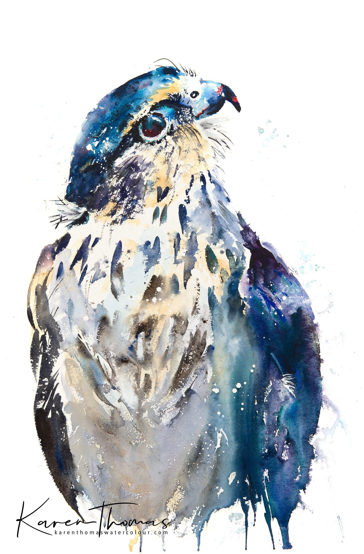 American Falcon