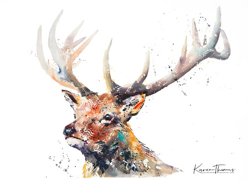 Dartmoor Prince
