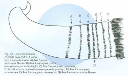 Imagem extraída do Livro: Nelore: a vitória brasileira. Santos, Rinaldo dos. Volume IV. Uberaba MG: Editora Agropecuária Tropical, 2000.