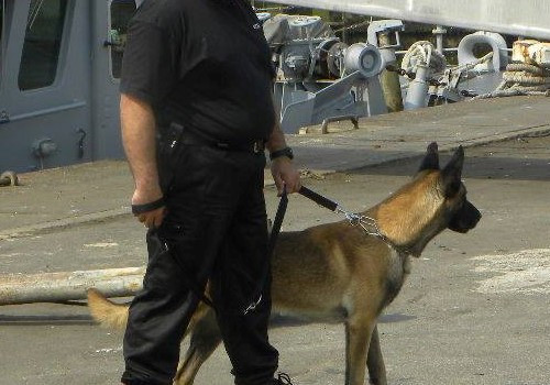 Protection canine