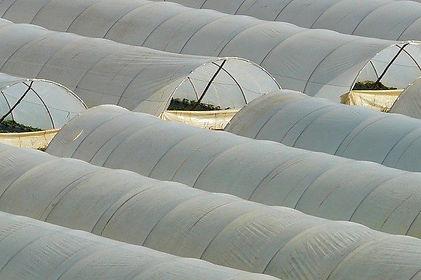 sécurisation-zone-agricole-et-élevage-ip