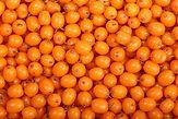 bacche di olivello spinoso