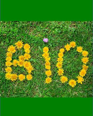 Prato con fiori a formare la scritta BIO
