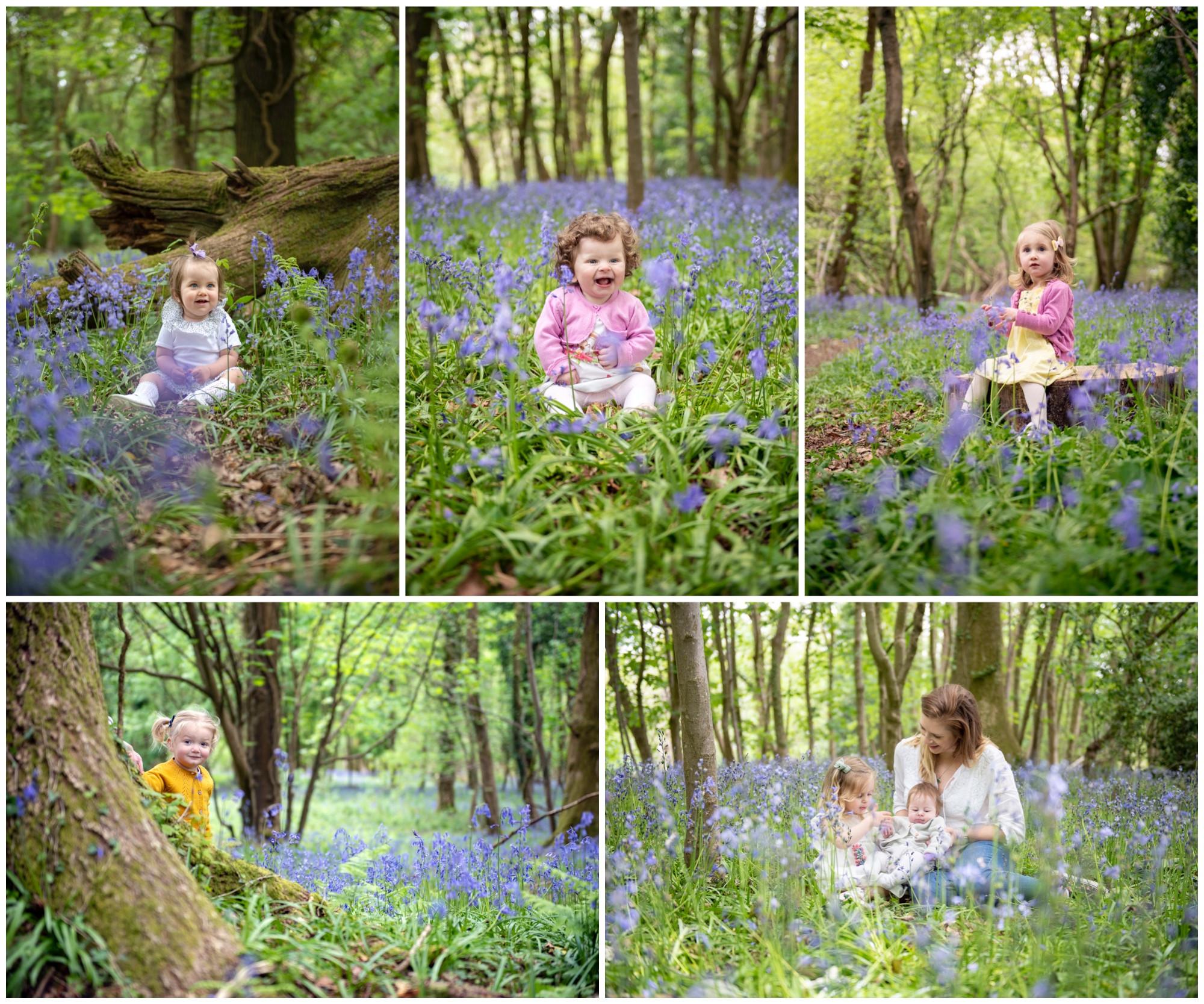 Bluebell Mini Shoots