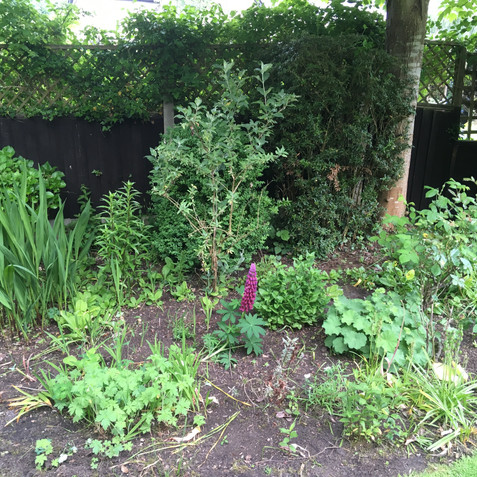 Area in need of new planting