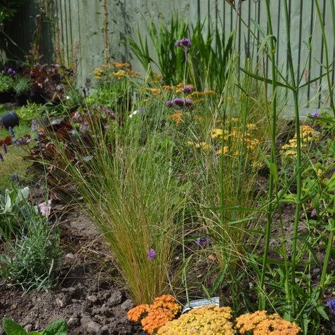 Contemporary cottage garden planting