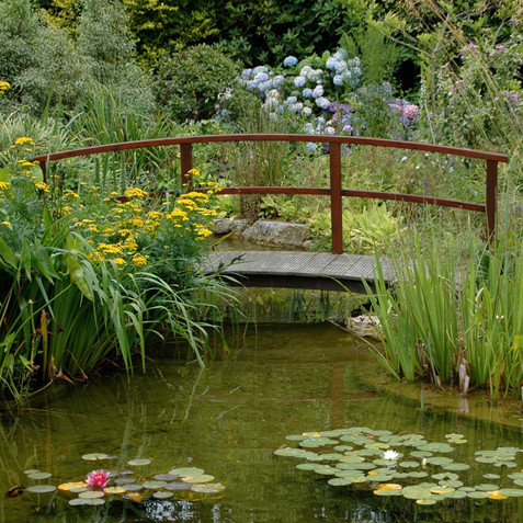 A large pond