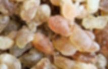 Frankincense-serrata-organic-essential-o