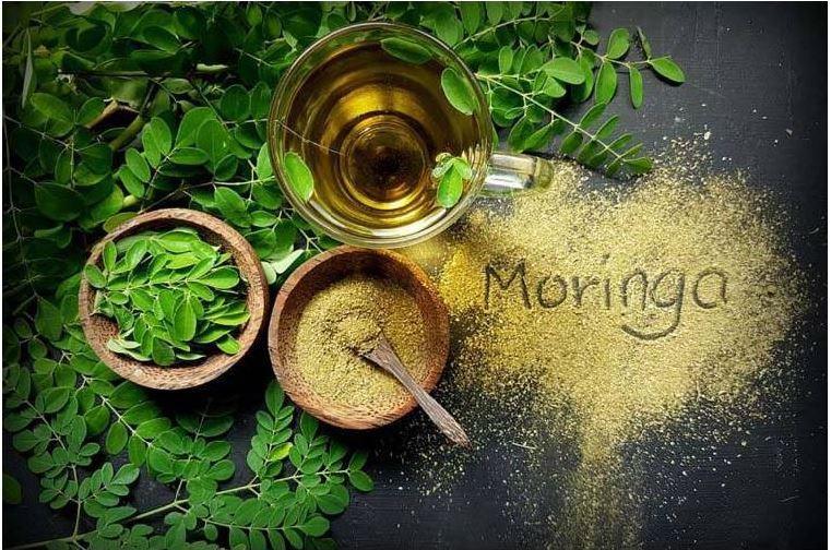moringa-feuilles-poudre-huile-plante-ayurvedique-arbre-miraculeux-sattva-ayurveda