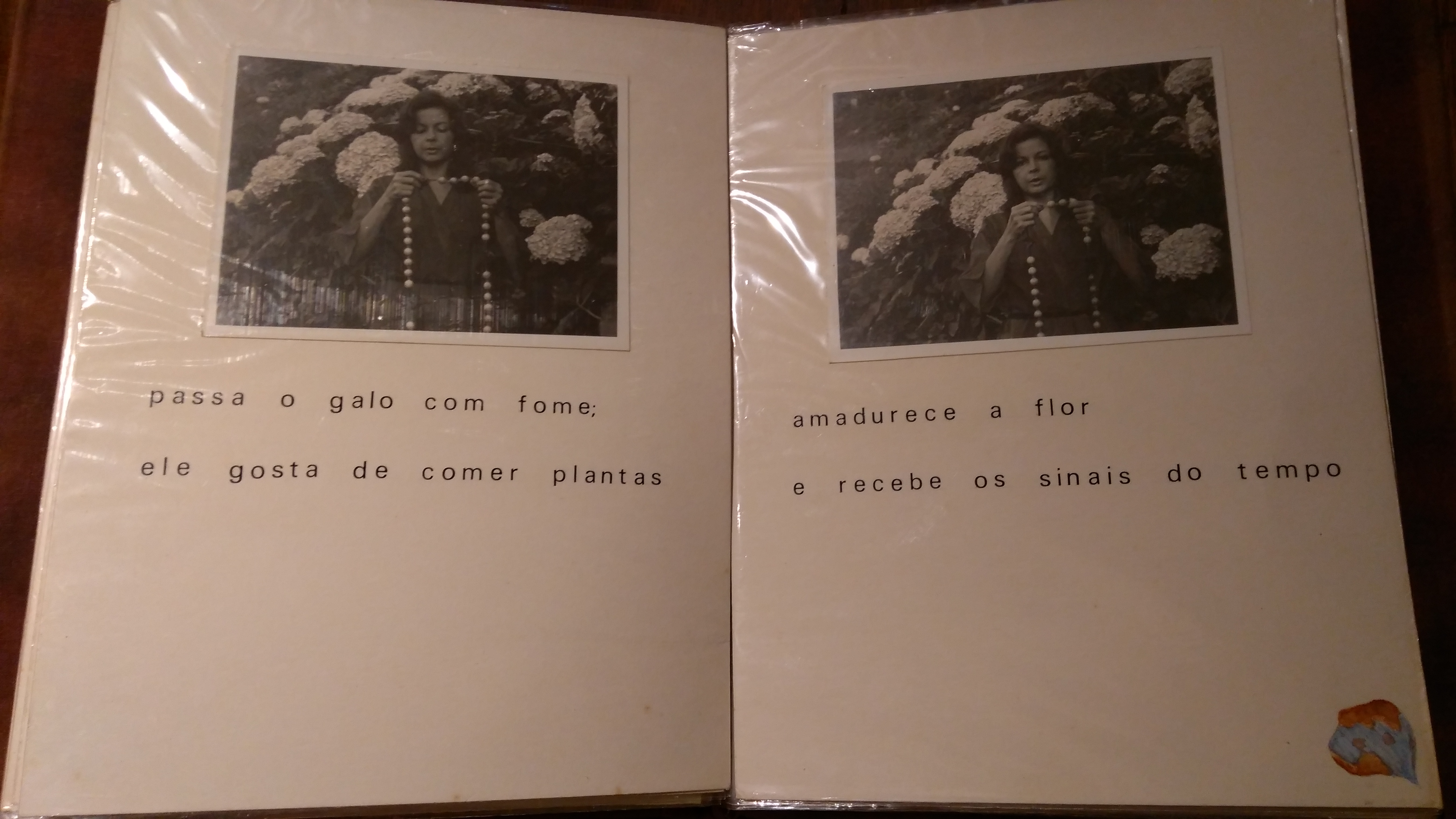 O terço da hortênsia, Yolanda Freyre