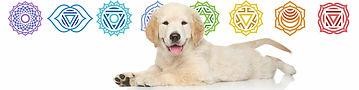 Dogs-have-chakra-centers-tiny.webp