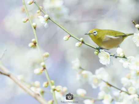 【撮影地情報】関西の梅の名所