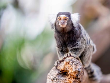 【ストアカ】かわいい動物の撮影会情報