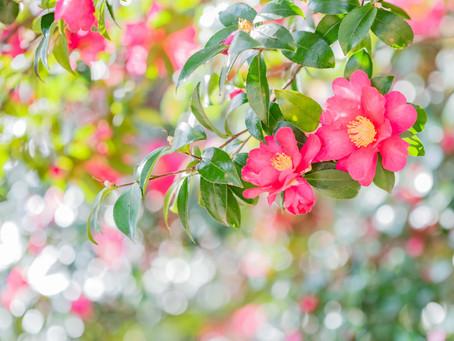 【ストアカ】花の撮影会情報