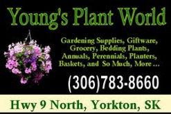 Youngs logo Apr 2012.jpg