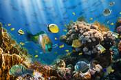 Backdrop Korallrev med fiskar