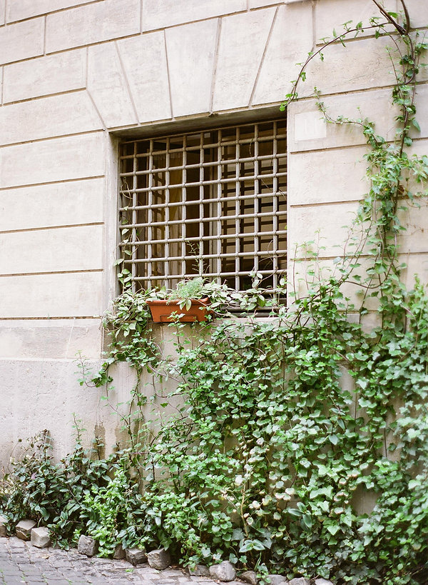 Plants growing in buildings in Rome