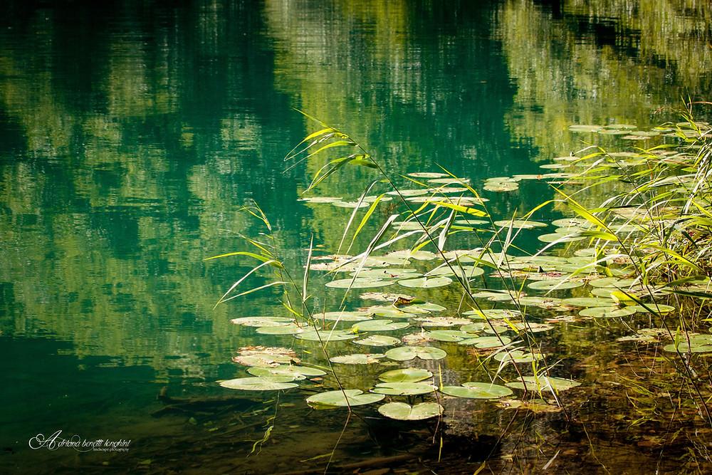 Lake Levico lilies flowers Trento
