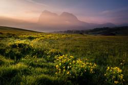 Alpe di Siusi alpine meadow
