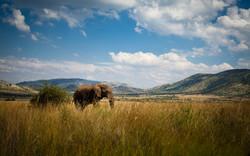elephant in panorama_