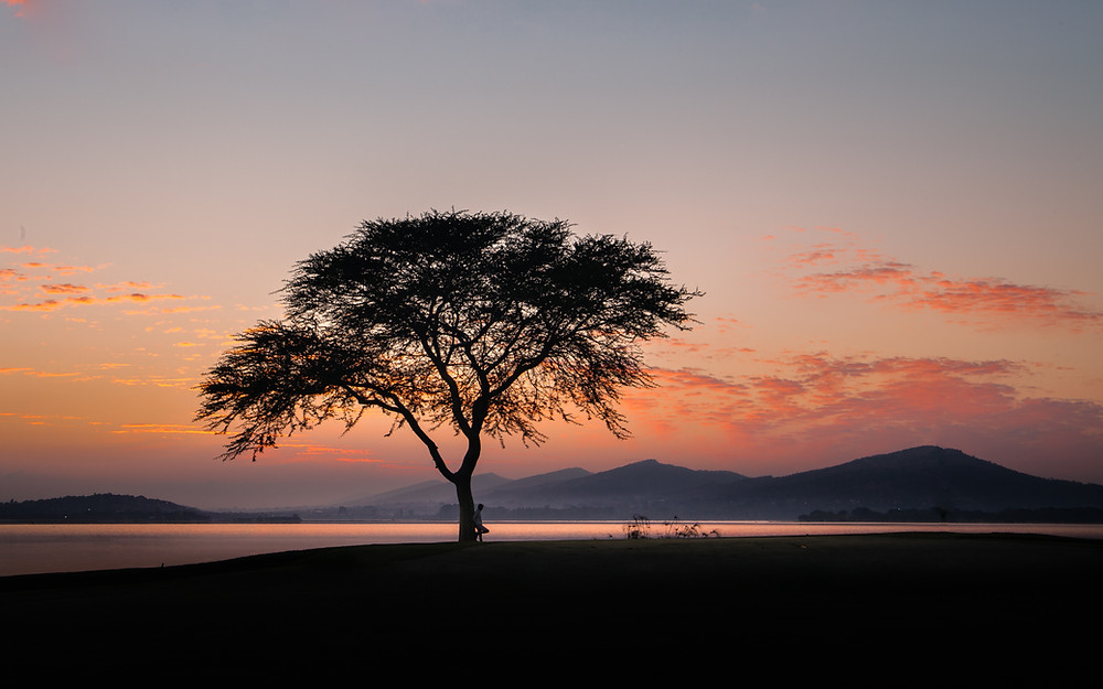thorn tree, african fever tree, sunrise, africa, south africa