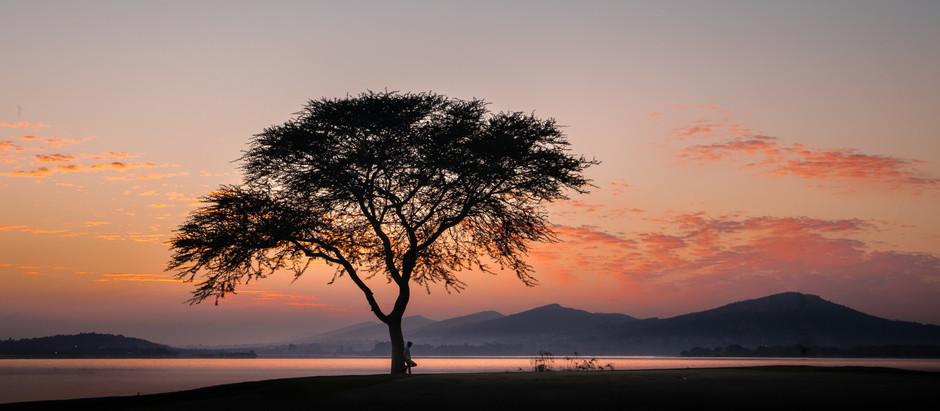 My love affair with Trees- Mio amore per gli alberi