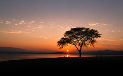 thorn tree sunrise at pecanwood_