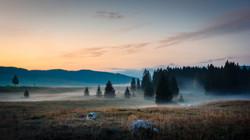 forest mist marcesina