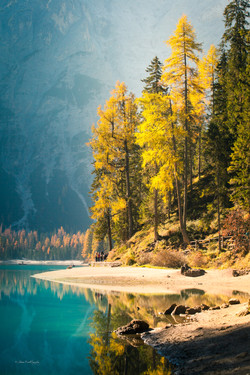 Autumn trees along shore of lake Braies.