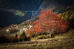 cherry tree stoner and bridge