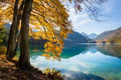 Alpensee shoreline