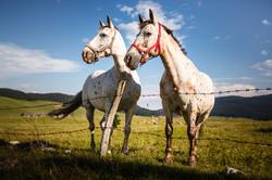 appaloosa horses marcesina