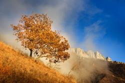 tree monte pau autumn