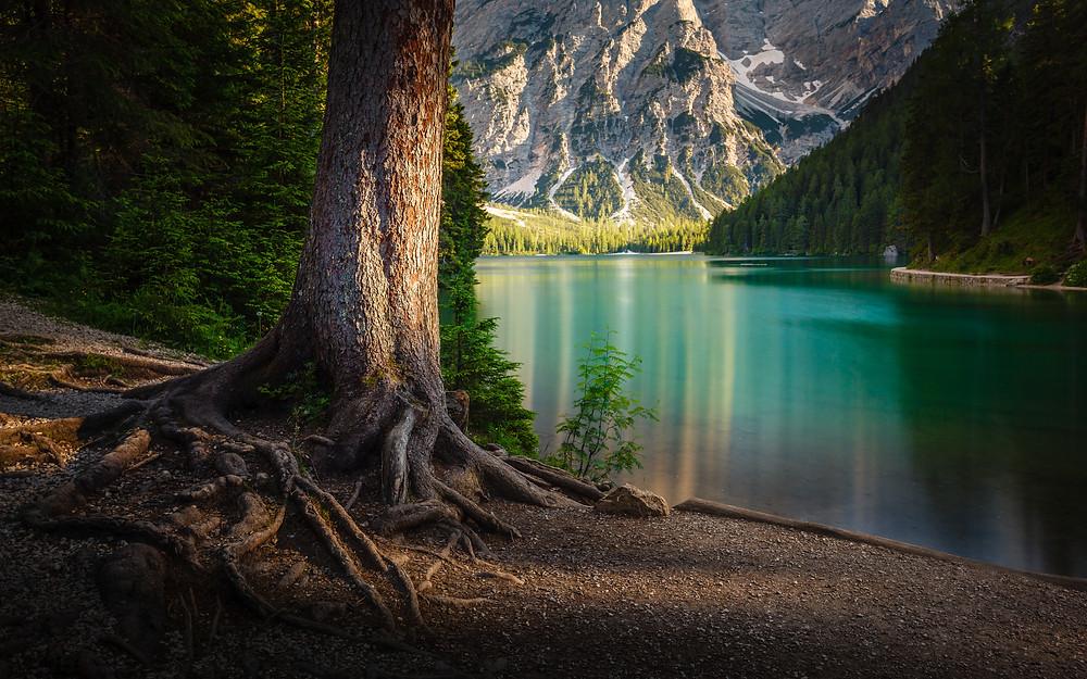 Lake Braies, spruce, tree, Dolomites, Italy, lake