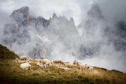 pecore a baita segantini