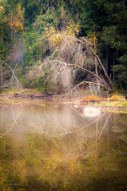 Silver birches in autumn, Dolomites