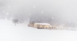 case carlini in the snow