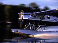 beaver taking off.jpg