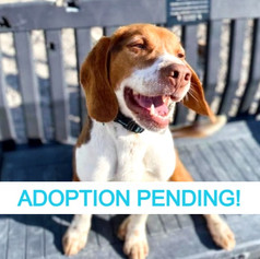 Levi (Adoption Pending!)