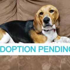 Sadie (Adoption Pending!)