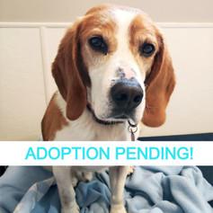 Mickey (Adoption Pending!)