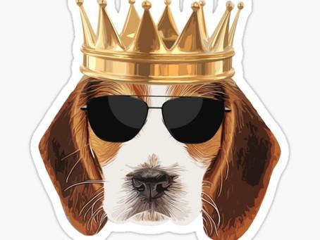 Beagle Mania - Homecoming!